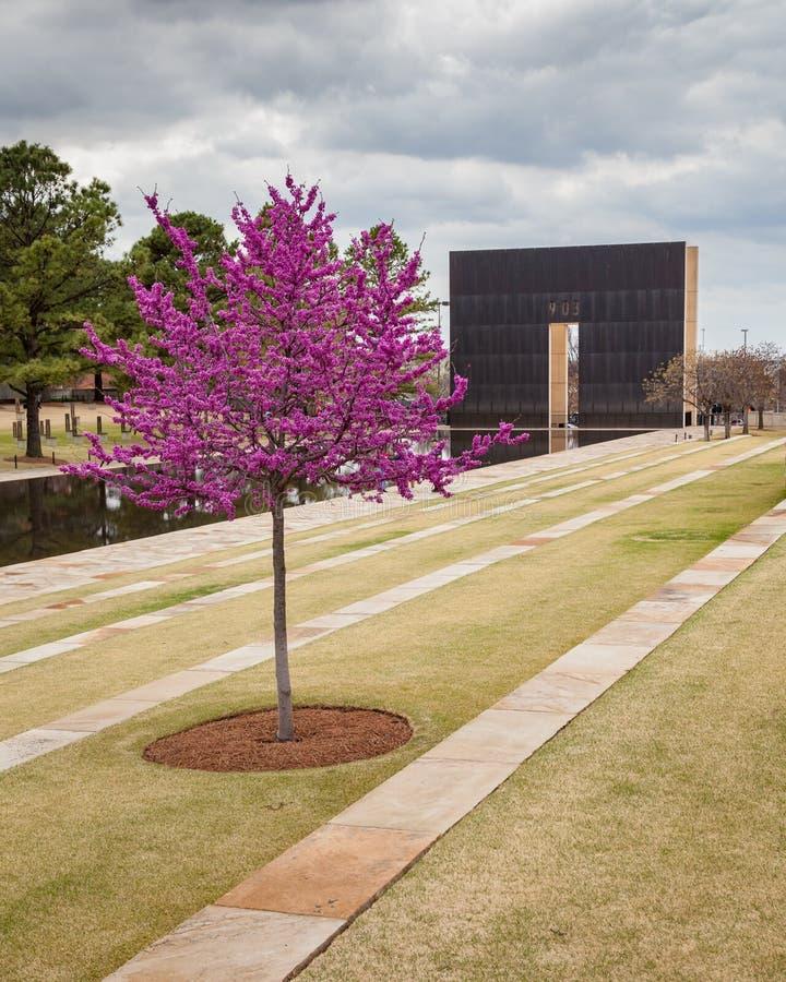 Ρόδινο δέντρο στο αναμνηστικό δημόσιο πάρκο Πόλεων της Οκλαχόμα στοκ φωτογραφίες με δικαίωμα ελεύθερης χρήσης