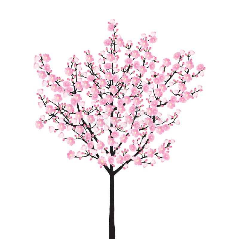 Ρόδινο δέντρο sakura πλήρους άνθισης, εκλεκτής ποιότητας μαύρο ξύλο ανθών κερασιών που απομονώνεται στο άσπρο υπόβαθρο, σκηνικό κ ελεύθερη απεικόνιση δικαιώματος