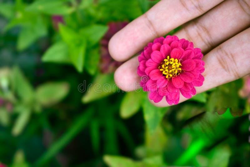 Ρόδινο λουλούδι με τα πράσινα πίσω επίγεια σπάνια είδη στοκ φωτογραφία με δικαίωμα ελεύθερης χρήσης