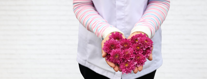 Ρόδινο λουλούδι μορφής καρδιών γυναικείας εκμετάλλευσης σε ετοιμότητα της στο άσπρο υπόβαθρο τούβλου για την έννοια σχεδίου αγάπη στοκ φωτογραφίες με δικαίωμα ελεύθερης χρήσης