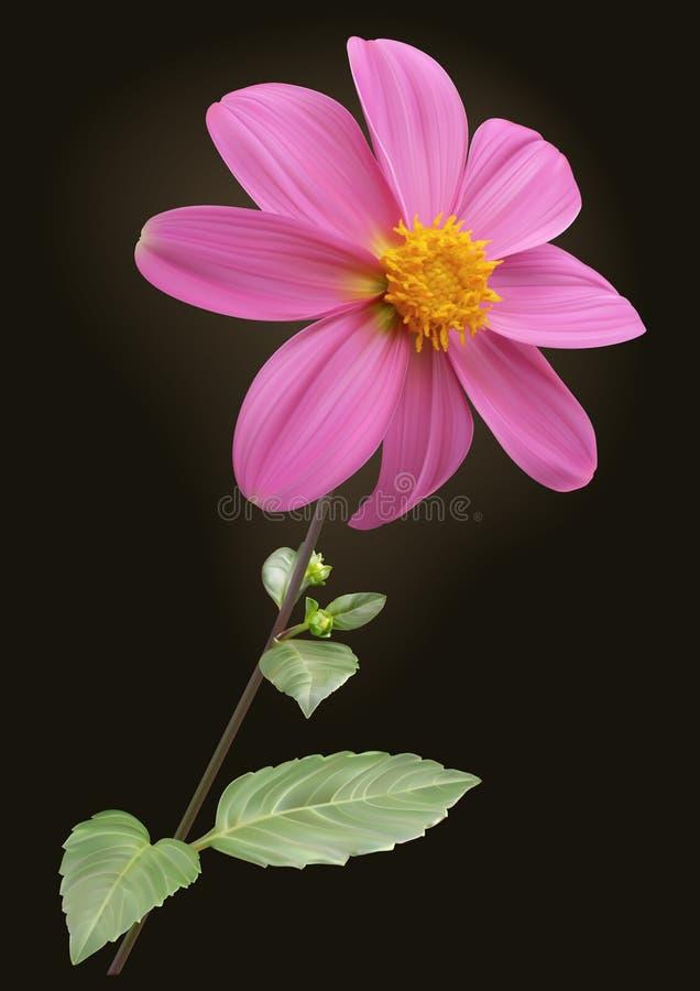 Ρόδινο λουλούδι νταλιών διανυσματική απεικόνιση