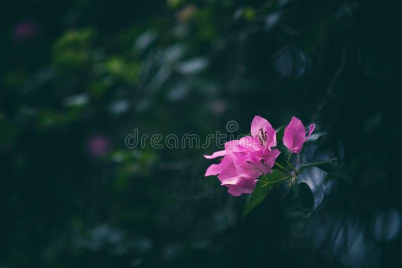 _ στοκ φωτογραφίες