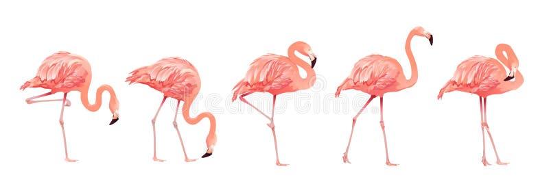 Ρόδινο φλαμίγκο πουλιών καθορισμένο τροπικό άγριο όμορφο εξωτικό ύφος σχεδίου συμβόλων επίπεδο που απομονώνεται στο άσπρο υπόβαθρ απεικόνιση αποθεμάτων