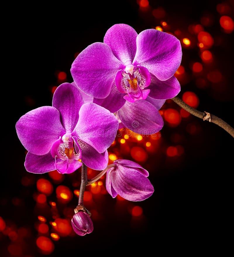 Ρόδινο orchid στοκ εικόνα με δικαίωμα ελεύθερης χρήσης