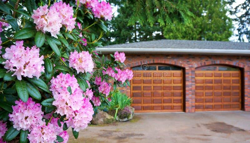 Ρόδινο rhododendron, θάμνος με τη διπλή ξύλινη πόρτα γκαράζ. στοκ εικόνες