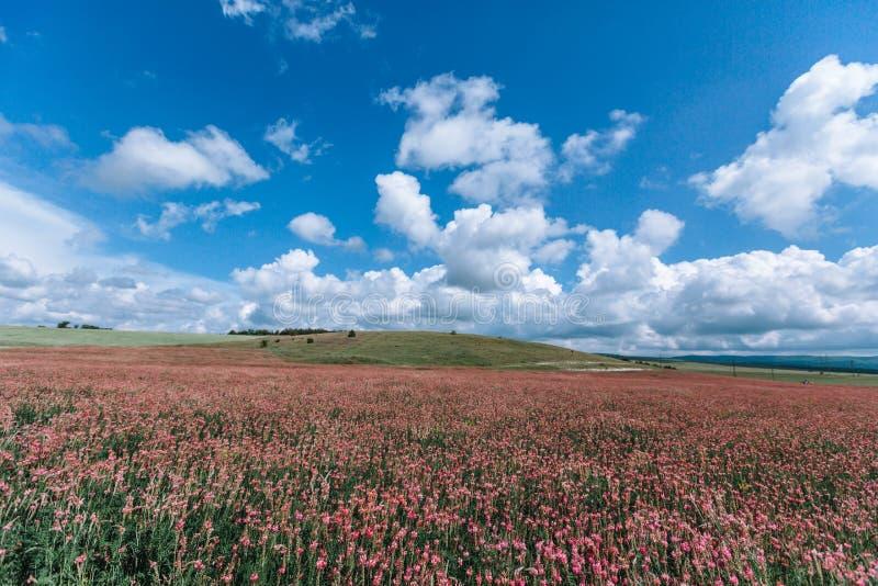 Ρόδινο sainfoin τομέων ενάντια στο μπλε ουρανό με τα άσπρα σύννεφα στοκ φωτογραφία με δικαίωμα ελεύθερης χρήσης