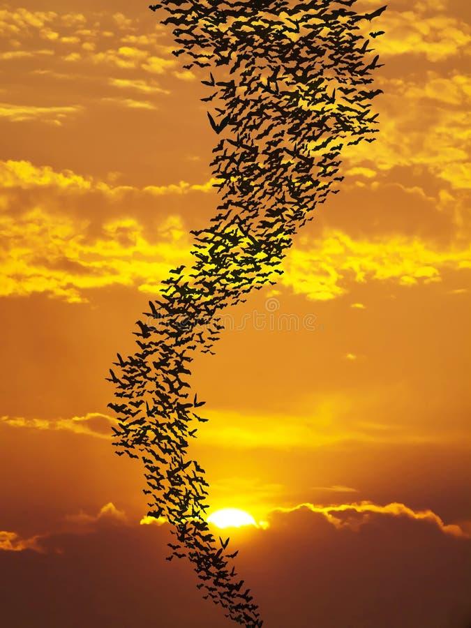 Ρόπαλα που πετούν againt τον ήλιο στοκ φωτογραφία με δικαίωμα ελεύθερης χρήσης