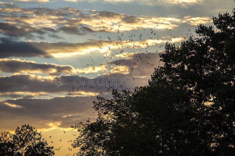 Ρόπαλα που πετούν πέρα από τα δέντρα στοκ εικόνα