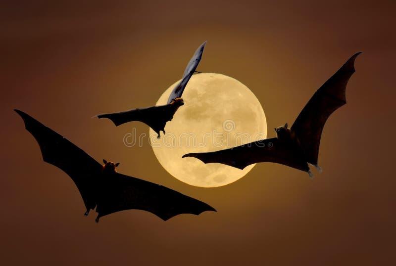 Ρόπαλα που πετούν τη νύχτα στοκ εικόνα