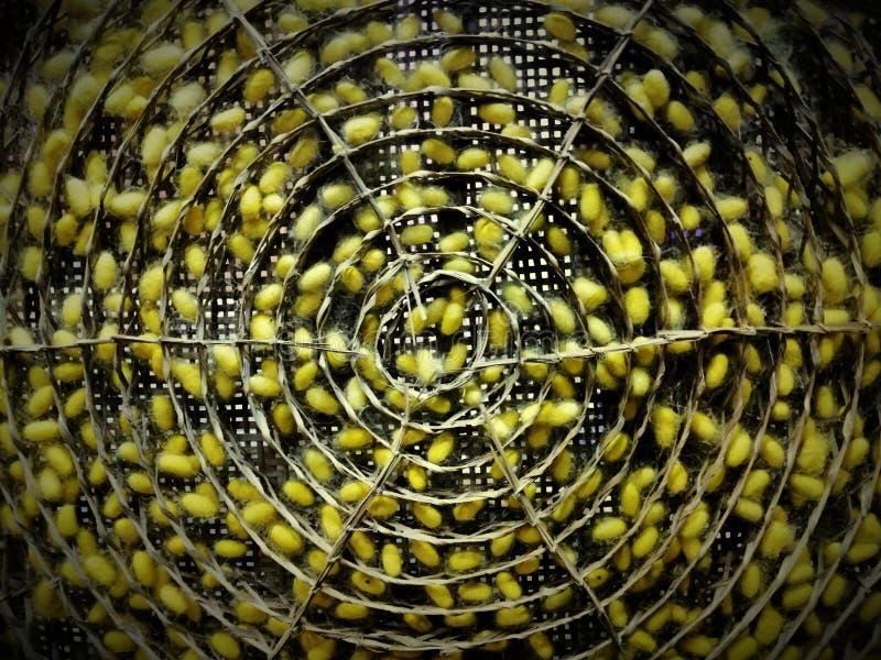 Ρόδα του κουκουλιού στοκ φωτογραφίες με δικαίωμα ελεύθερης χρήσης