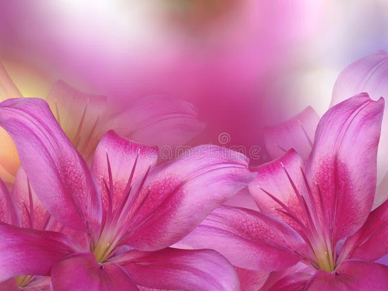 Ρόδινα λουλούδια κρίνων, στο ρόδινος-πορφυρός-κίτρινο θολωμένο υπόβαθρο closeup στοκ φωτογραφία