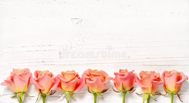 Ρόδινα τριαντάφυλλα στο άσπρο ξύλινο υπόβαθρο στοκ εικόνες με δικαίωμα ελεύθερης χρήσης