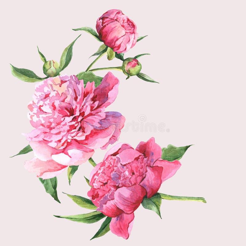 Ρόδινη εκλεκτής ποιότητας ευχετήρια κάρτα watercolor peonies διανυσματική απεικόνιση