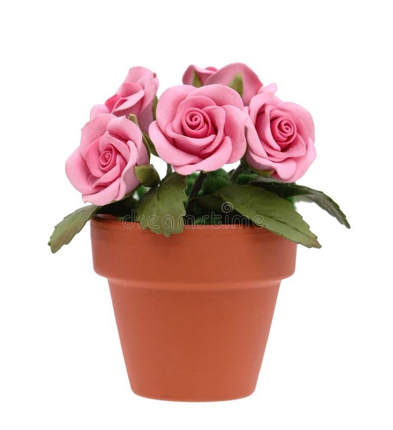 Ρόδινος αυξήθηκε λουλούδια στο δοχείο αργίλου στοκ φωτογραφία με δικαίωμα ελεύθερης χρήσης