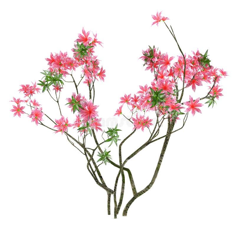 Ρόδινος θάμνος λουλουδιών απεικόνιση αποθεμάτων