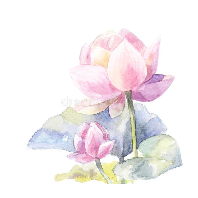 Ρόδινος λωτός Watercolor διανυσματική απεικόνιση