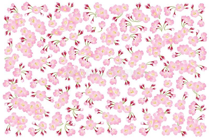 Ρόδινο άνθος κερασιών δέντρων sakura πλήρους άνθισης που απομονώνεται στο λευκό, σκηνικό λουλουδιών διανυσματική απεικόνιση