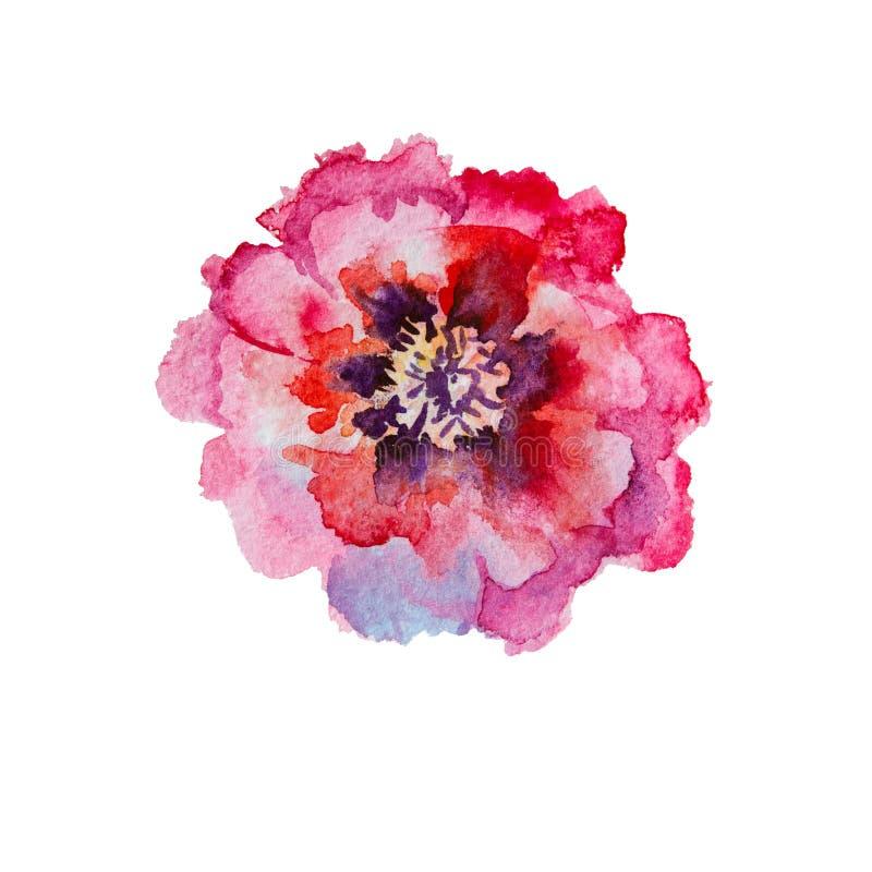 Ρόδινο, κόκκινο peony watercolor άνθισης στοκ φωτογραφία με δικαίωμα ελεύθερης χρήσης