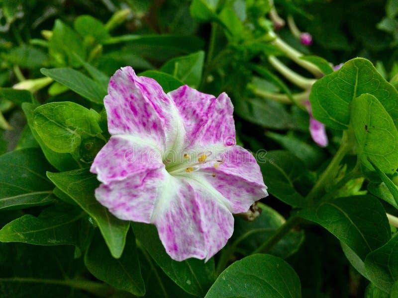 Ρόδινο μικρό λουλούδι στοκ φωτογραφία με δικαίωμα ελεύθερης χρήσης