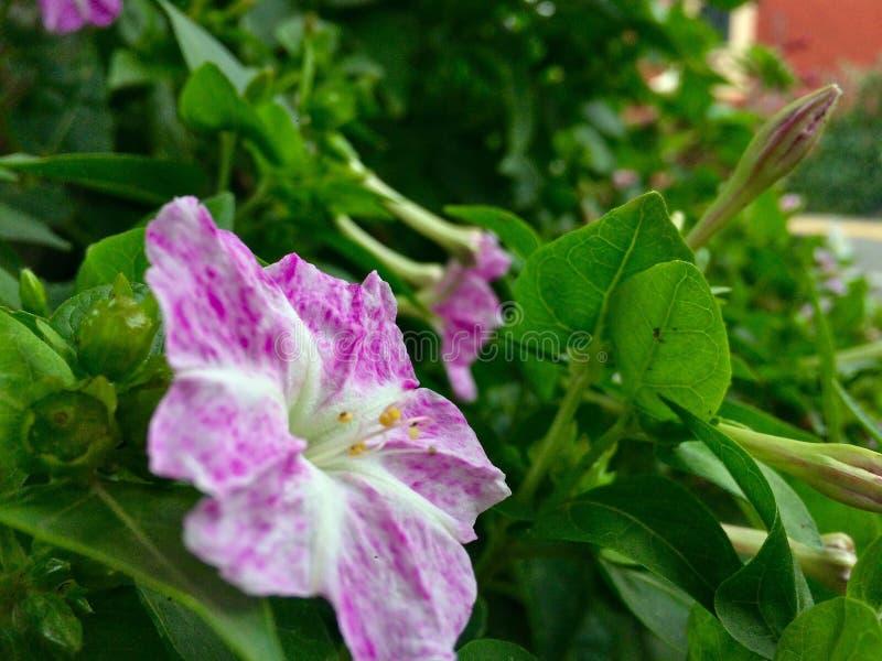 Ρόδινο μικρό λουλούδι στοκ φωτογραφίες