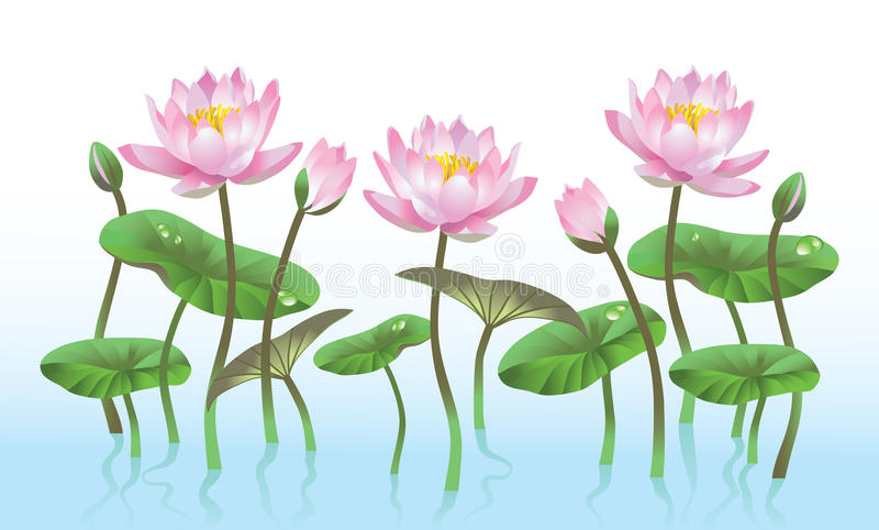 Ρόδινο λουλούδι λωτού διανυσματική απεικόνιση