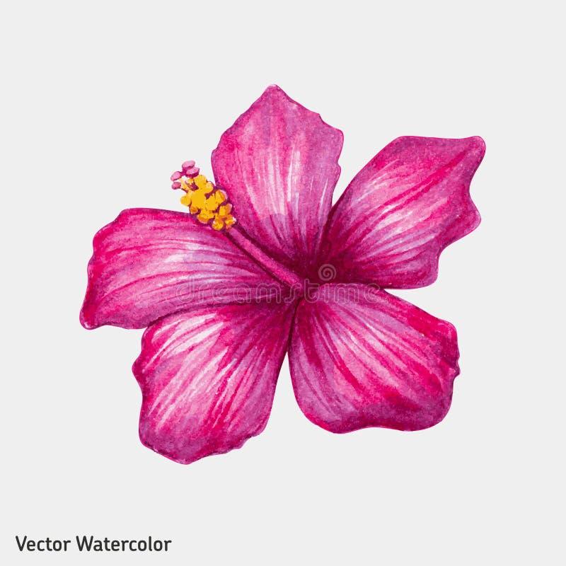 Ρόδινο hibiscus Watercolor λουλούδι διανυσματική απεικόνιση