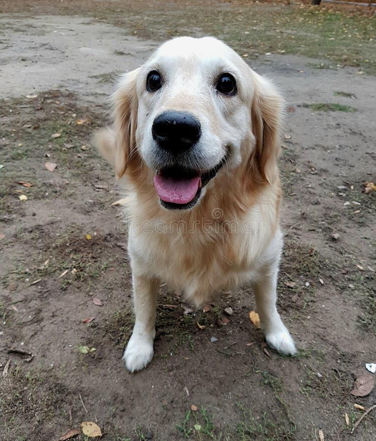 ρύγχος μιας κινηματογράφησης σε πρώτο πλάνο σκυλιών στοκ φωτογραφία με δικαίωμα ελεύθερης χρήσης