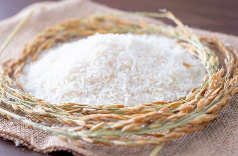 Ρύζι γιασεμί της Ταϊλάνδης και ρύζι με στάχτη σε ξύλινο φόντο στοκ φωτογραφία