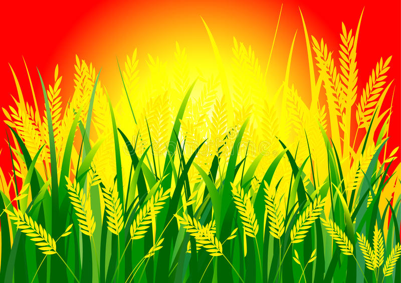 Ρύζι και ήλιος στοκ εικόνα με δικαίωμα ελεύθερης χρήσης