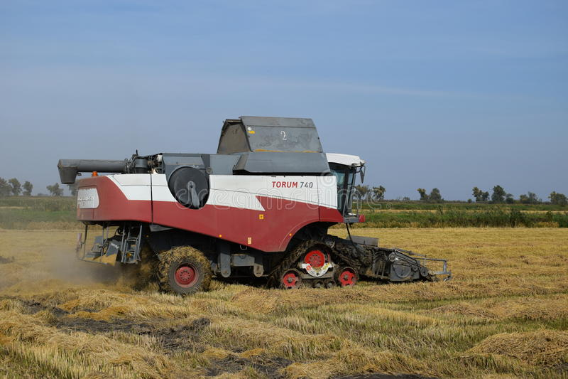 Ρύζι που συγκομίζει τη krasnodar περιοχή στοκ φωτογραφία