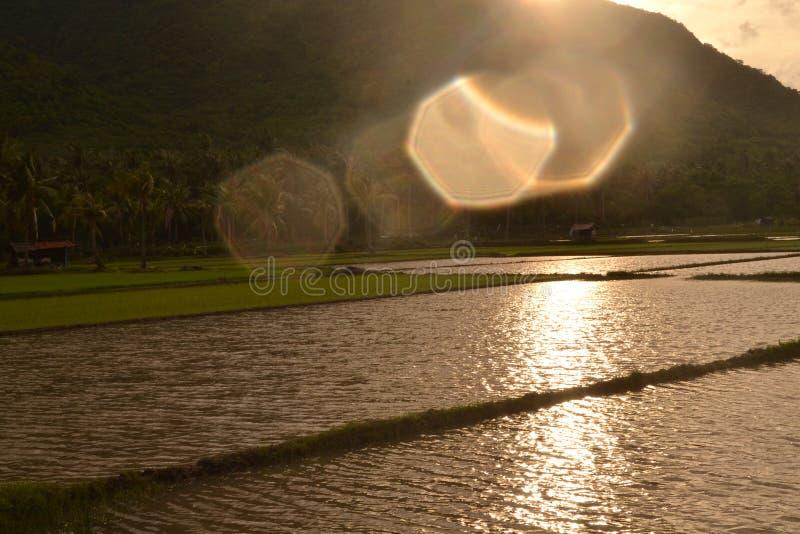 Ρύζι τομέων σε Karimun Jawa στοκ φωτογραφία με δικαίωμα ελεύθερης χρήσης