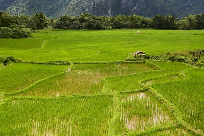 ρύζι του Λάος πεδίων vang vieng στοκ εικόνα