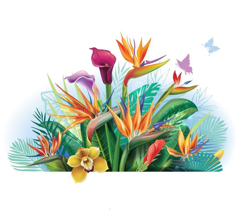 Ρύθμιση με τα λουλούδια Strelitzia διανυσματική απεικόνιση