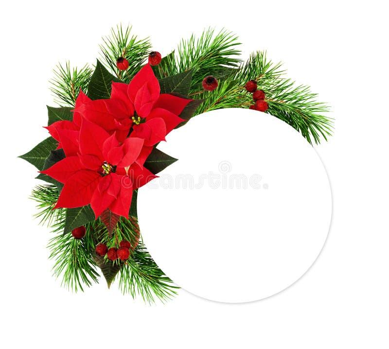 Ρύθμιση Χριστουγέννων με τα κόκκινα λουλούδια poinsettia, κλαδίσκοι πεύκων στοκ εικόνες