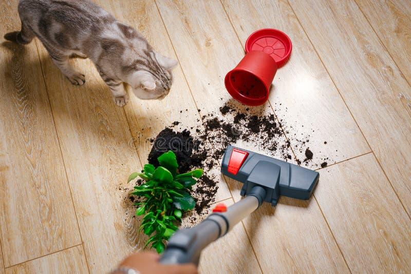 Ρύπος σκουπίσματος με ηλεκτρική σκούπα από το πάτωμα στοκ εικόνα