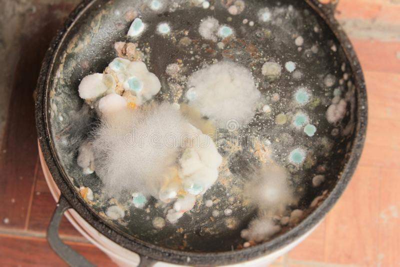 Σάπια και moldy κινηματογράφηση σε πρώτο πλάνο τροφίμων στοκ εικόνες