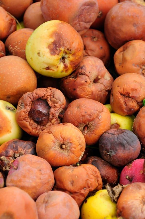 Σάπια μήλα στοκ φωτογραφία