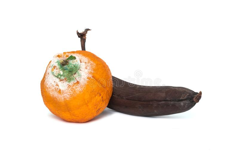 Σάπια τροπικά φρούτα που καλύπτονται με τη φόρμα στοκ φωτογραφίες