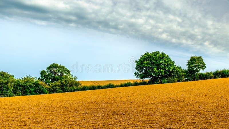 Σάσσεξ-οργωμένος τομέας σίκαλης ανατολικά στοκ εικόνες με δικαίωμα ελεύθερης χρήσης
