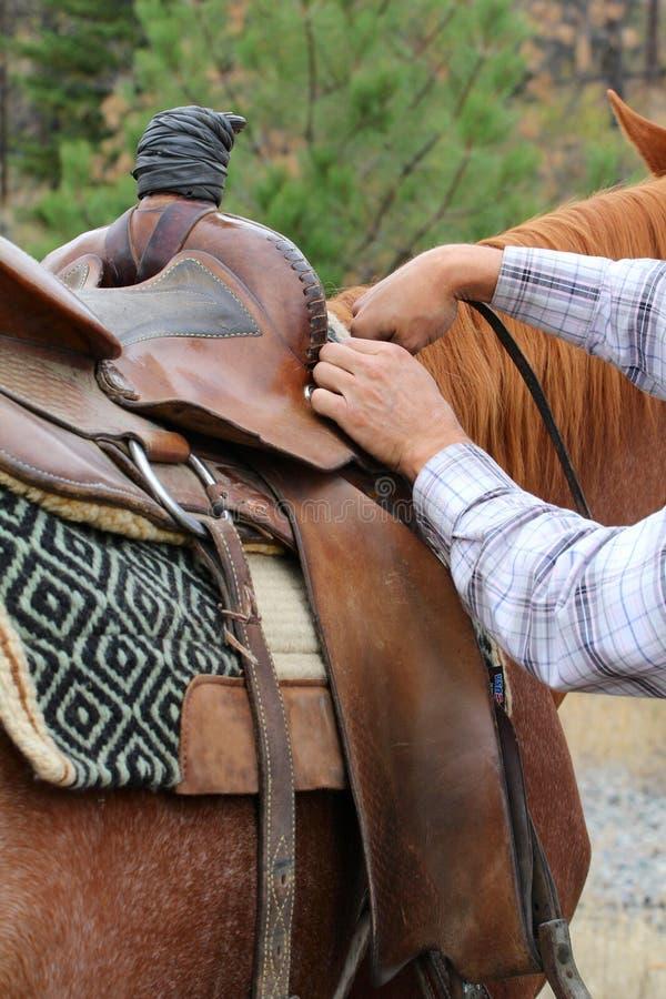 Download σέλα ρύθμισης στοκ εικόνες. εικόνα από άτομο, αγάπη, άλογο - 22777356