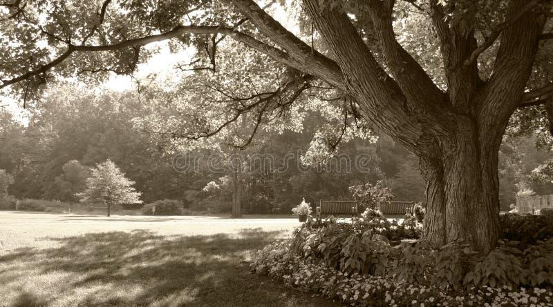 σέπια σκηνής πάρκων που τονί στοκ εικόνες με δικαίωμα ελεύθερης χρήσης