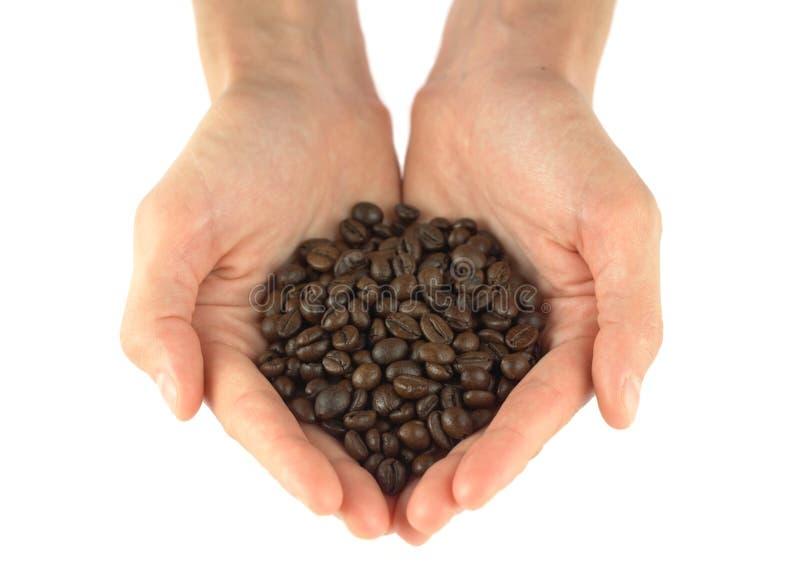 σέσουλα καφέ φασολιών στοκ εικόνες