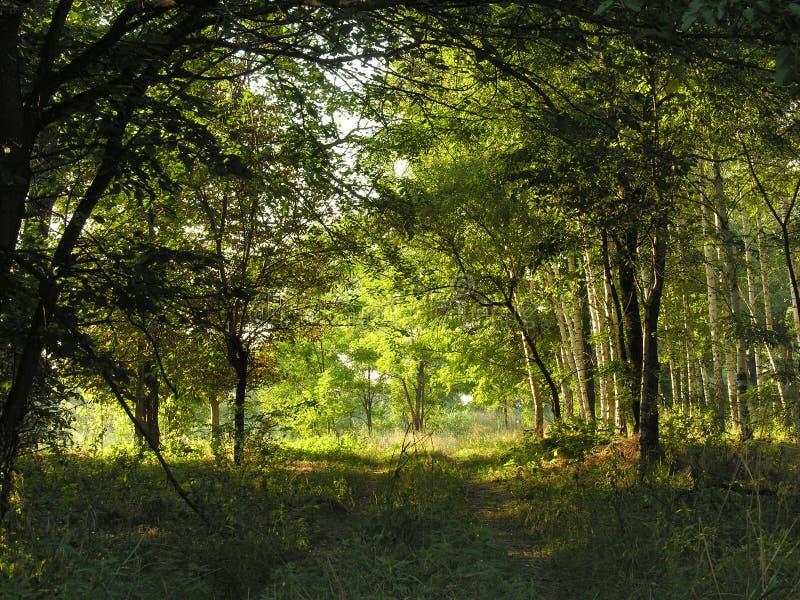 σήραγγα δέντρων στοκ εικόνα με δικαίωμα ελεύθερης χρήσης