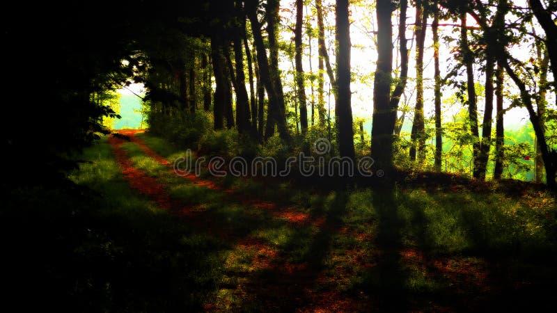 Σήραγγα μέσω των δέντρων στοκ εικόνες