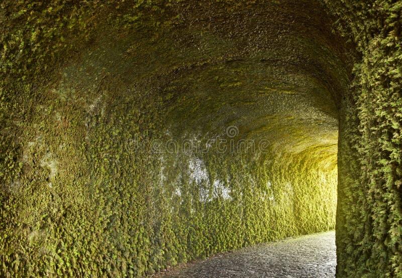 Σήραγγα με τις εγκαταστάσεις κισσών στον υγρό τοίχο Πέτρινη διάβαση στοκ εικόνες με δικαίωμα ελεύθερης χρήσης