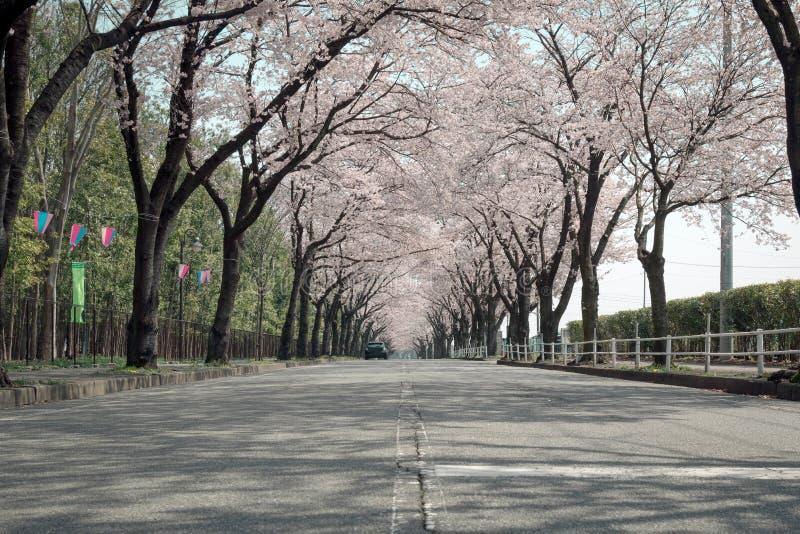 Σήραγγα των δέντρων με το κεράσι που ανθίζει κατά μήκος του τοπικού δρόμου στην Ιαπωνία στοκ φωτογραφία