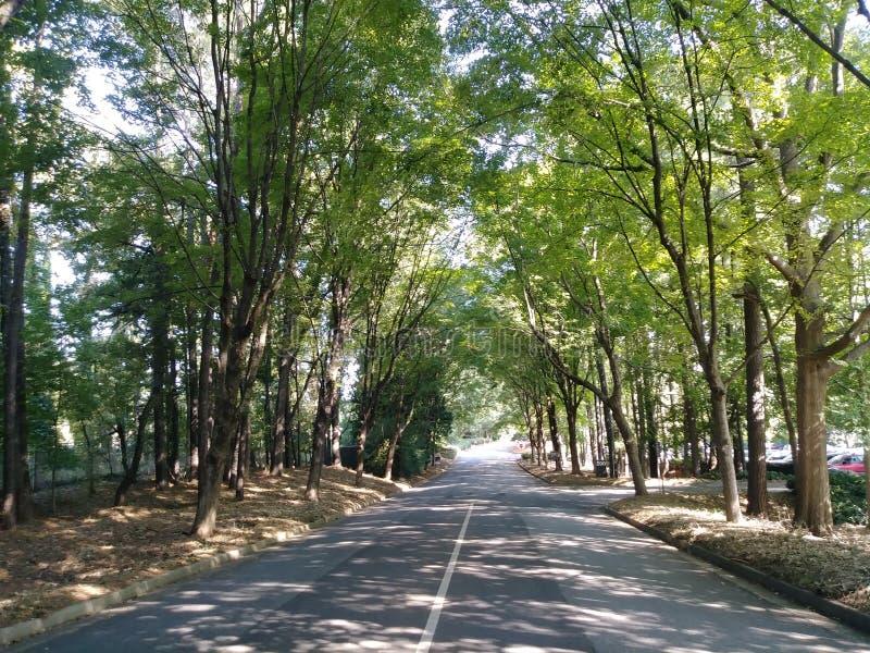 Σήραγγα των δέντρων στοκ εικόνα με δικαίωμα ελεύθερης χρήσης