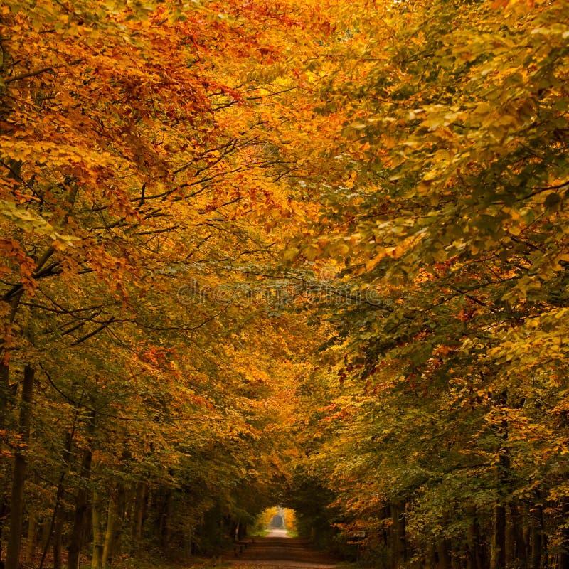 Σήραγγα φθινοπώρου στοκ εικόνα με δικαίωμα ελεύθερης χρήσης