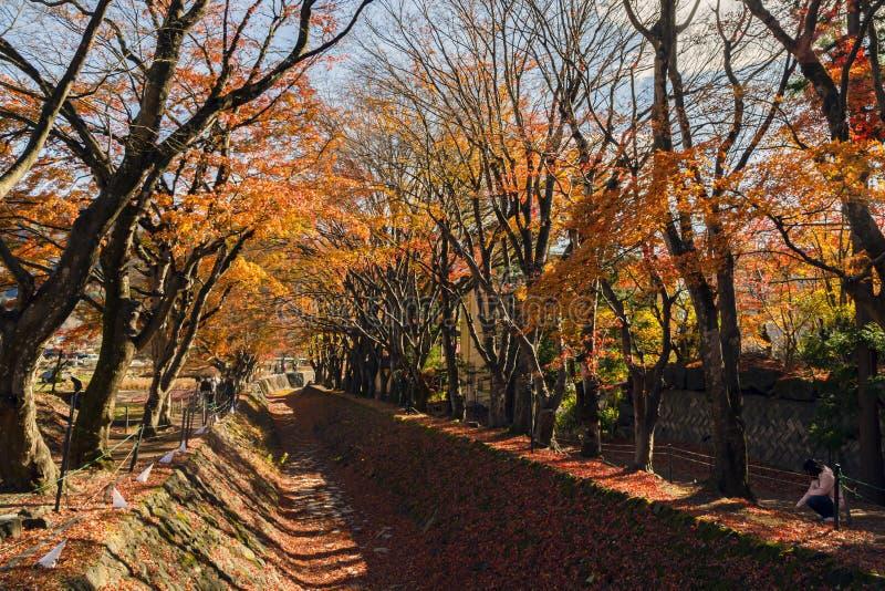 Σήραγγα φύλλων σφενδάμνου στην Ιαπωνία στοκ φωτογραφίες