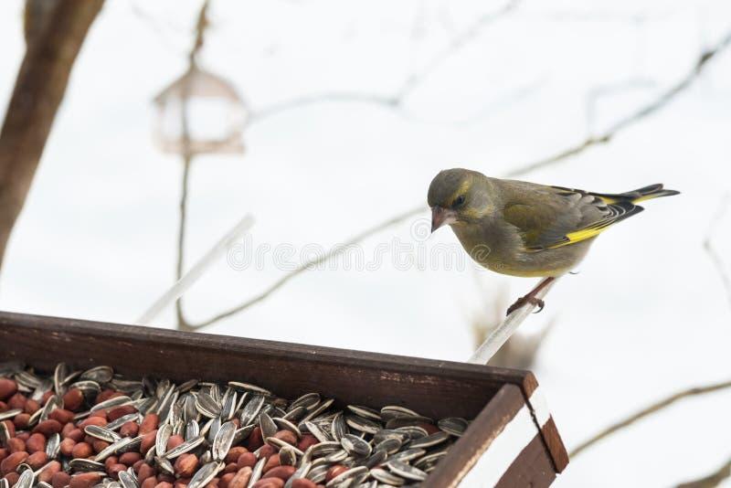 Σίτιση άγριων πτηνών στοκ εικόνες